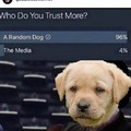 Dogs > media