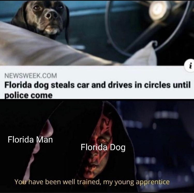 Florida dog - meme