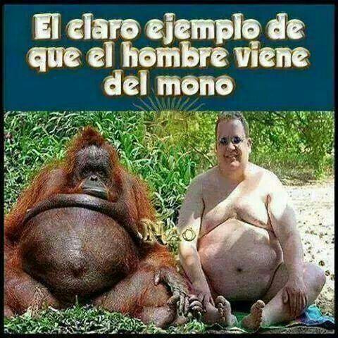 El hombre y el mono - meme
