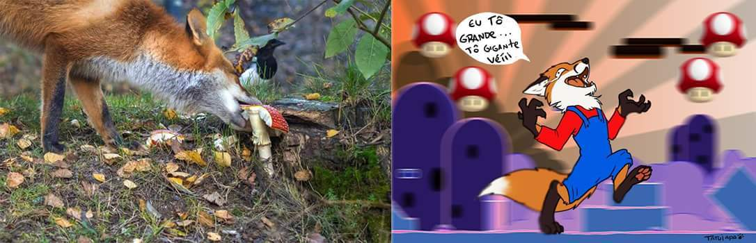 Cogumelos c: - meme