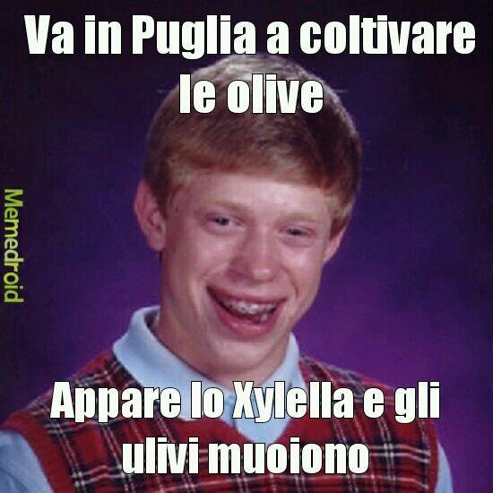 Olive - meme