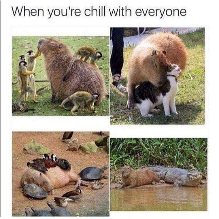 When you are chill with everyone | gagbee.com - meme