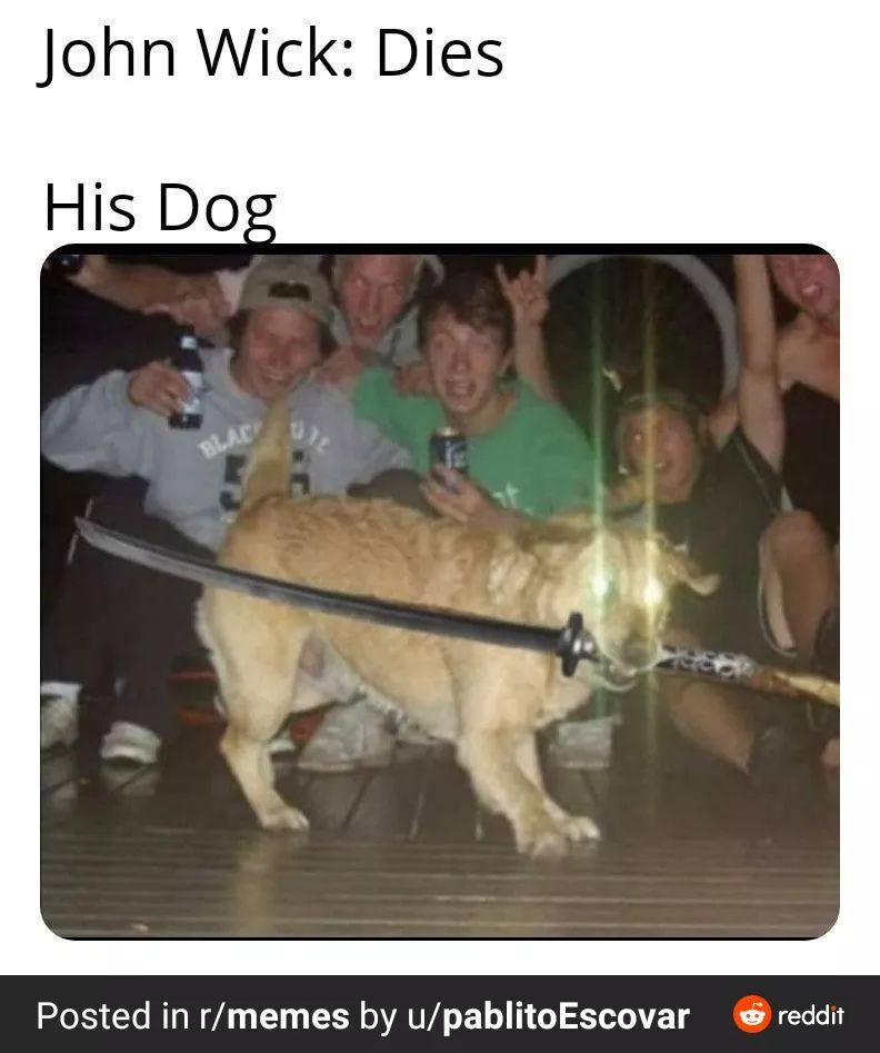 Here's comes the ninja  good boy - meme
