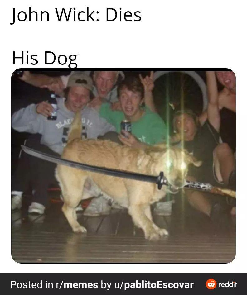 The Best John Wick Memes Memedroid