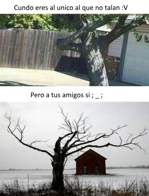 La wea weona - meme