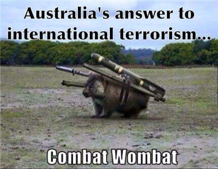 Combat wombat - meme