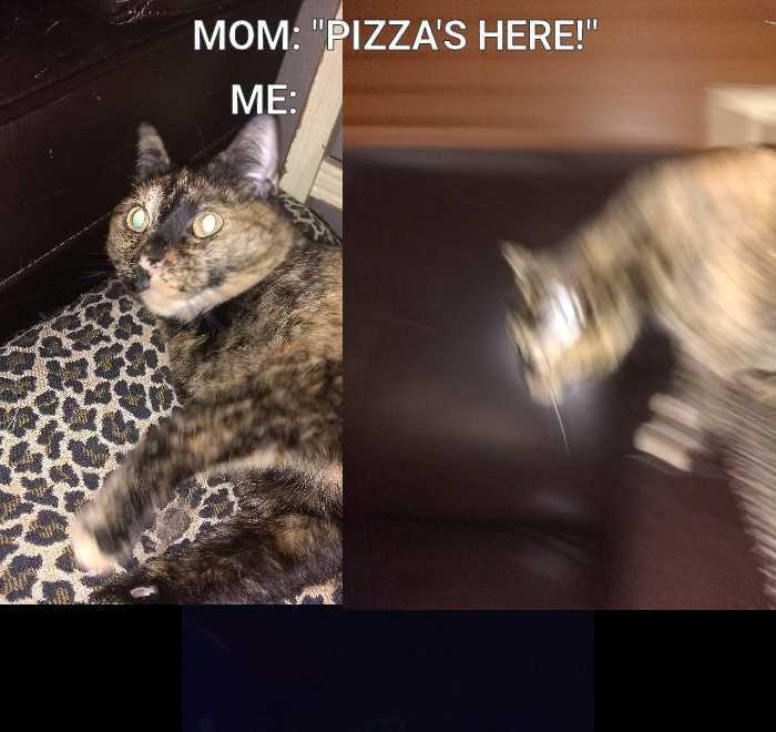 New meme format...