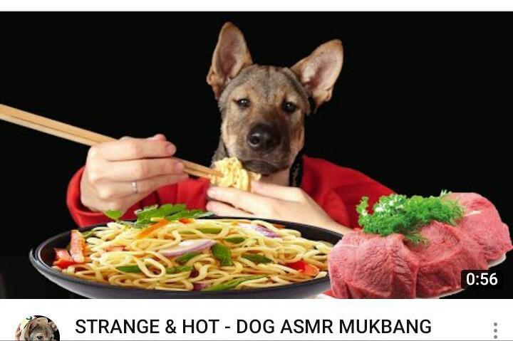 Ohhh por Dios, perro comiendo spaghetti - meme