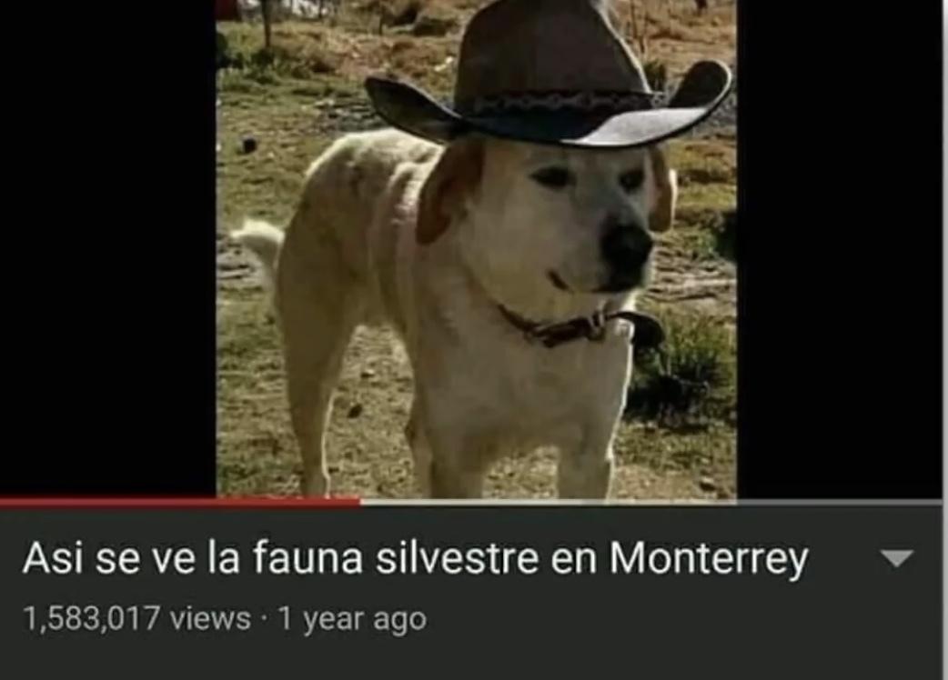 Pito - meme