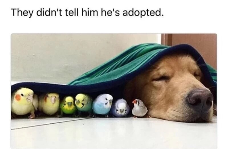 adopted - meme