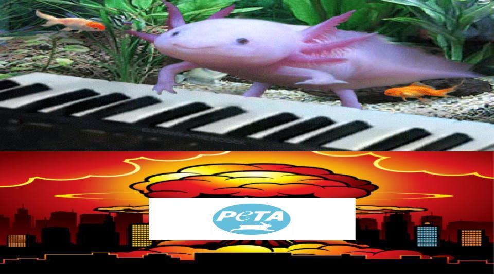 bad ending:peta no descubre que es falso y funa al creador. pd:lo haria un gif pero no se como asi que si quieren ver el video busquen axolotl piano en youtube y te aparece - meme