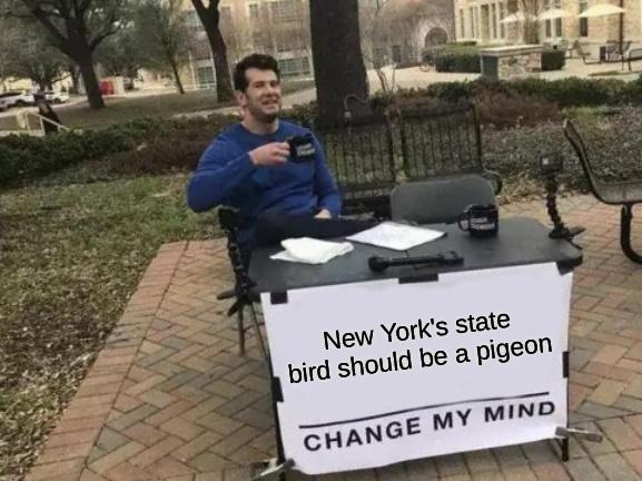 new york bird - meme