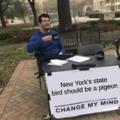 new york bird