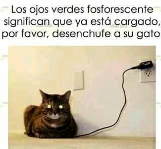 Gato - meme