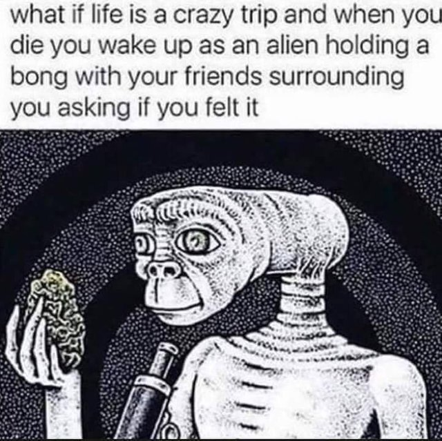 What if life is a crazy trip and we're all aliens? - meme