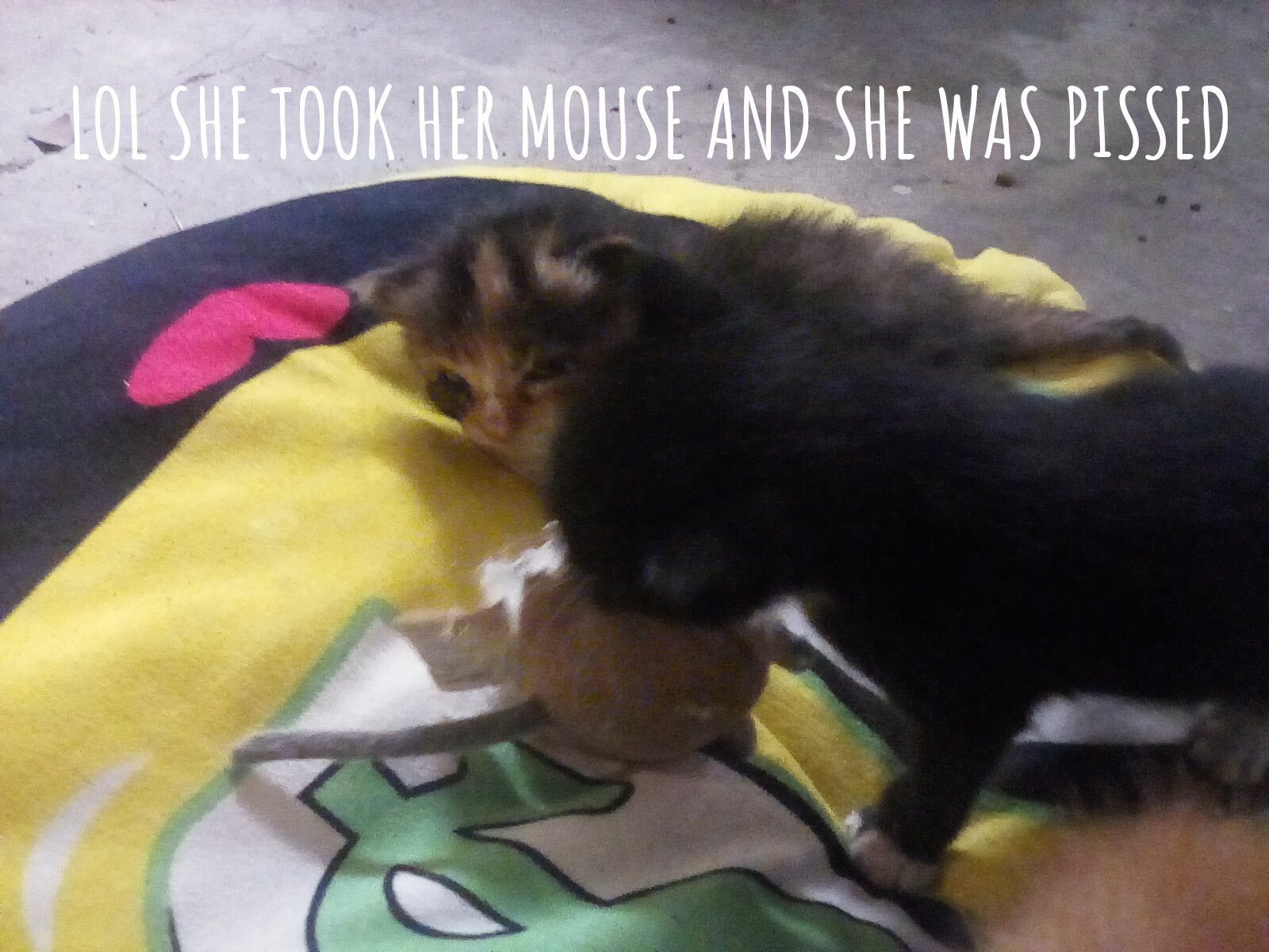 Lol she stole that toy mouse - meme