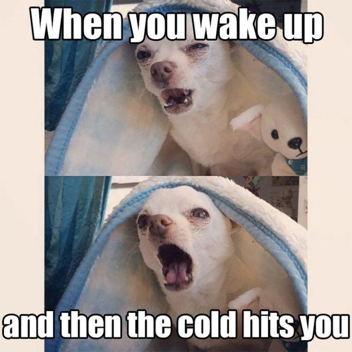 Cold wind - meme