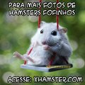 Hamsters fofos