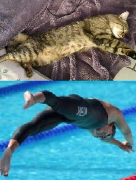 Le chat il plonge en fait c'est tro drol - meme