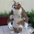 Atualização pro Bárbaro felino. (Não vai passar mas tá ae mesmo assim)