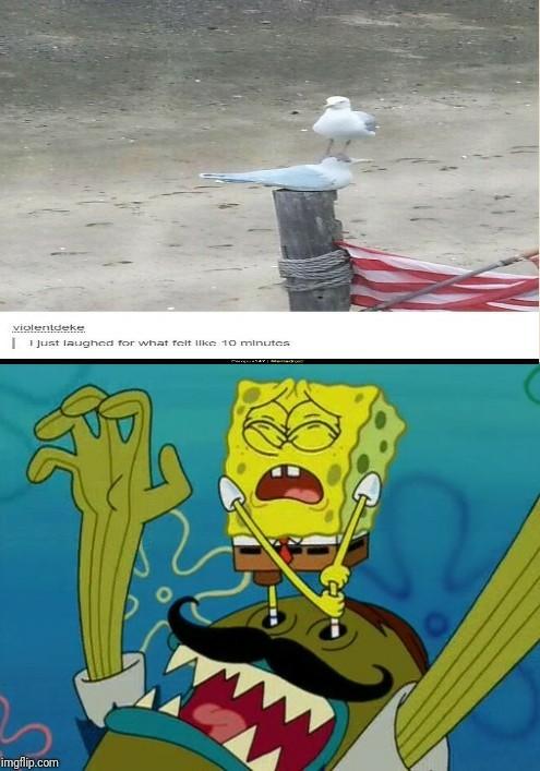 Spongebob's Bodyguard - meme