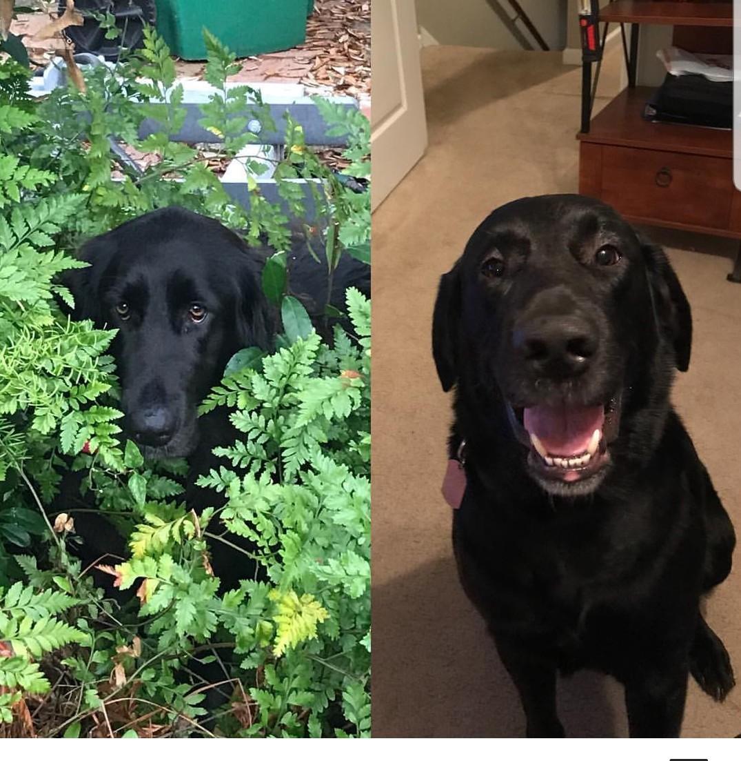 I really miss my doggos  - meme