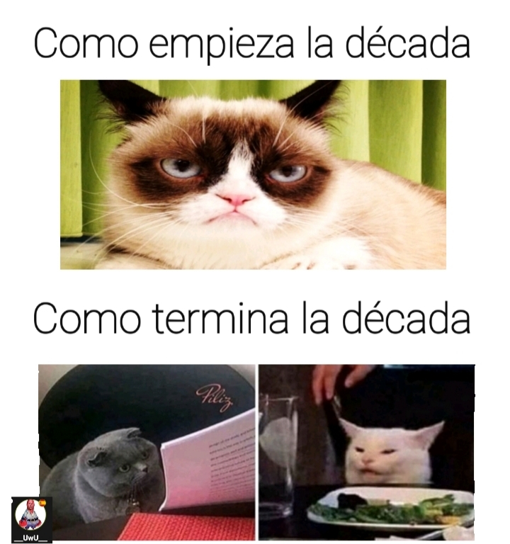 los gatos - meme