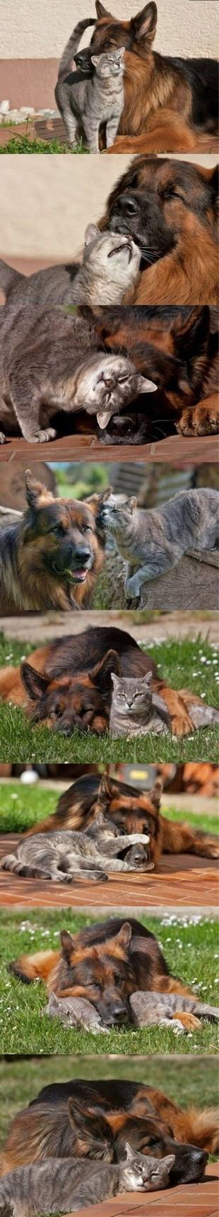 fascinating relationship - meme