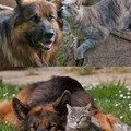 fascinating relationship
