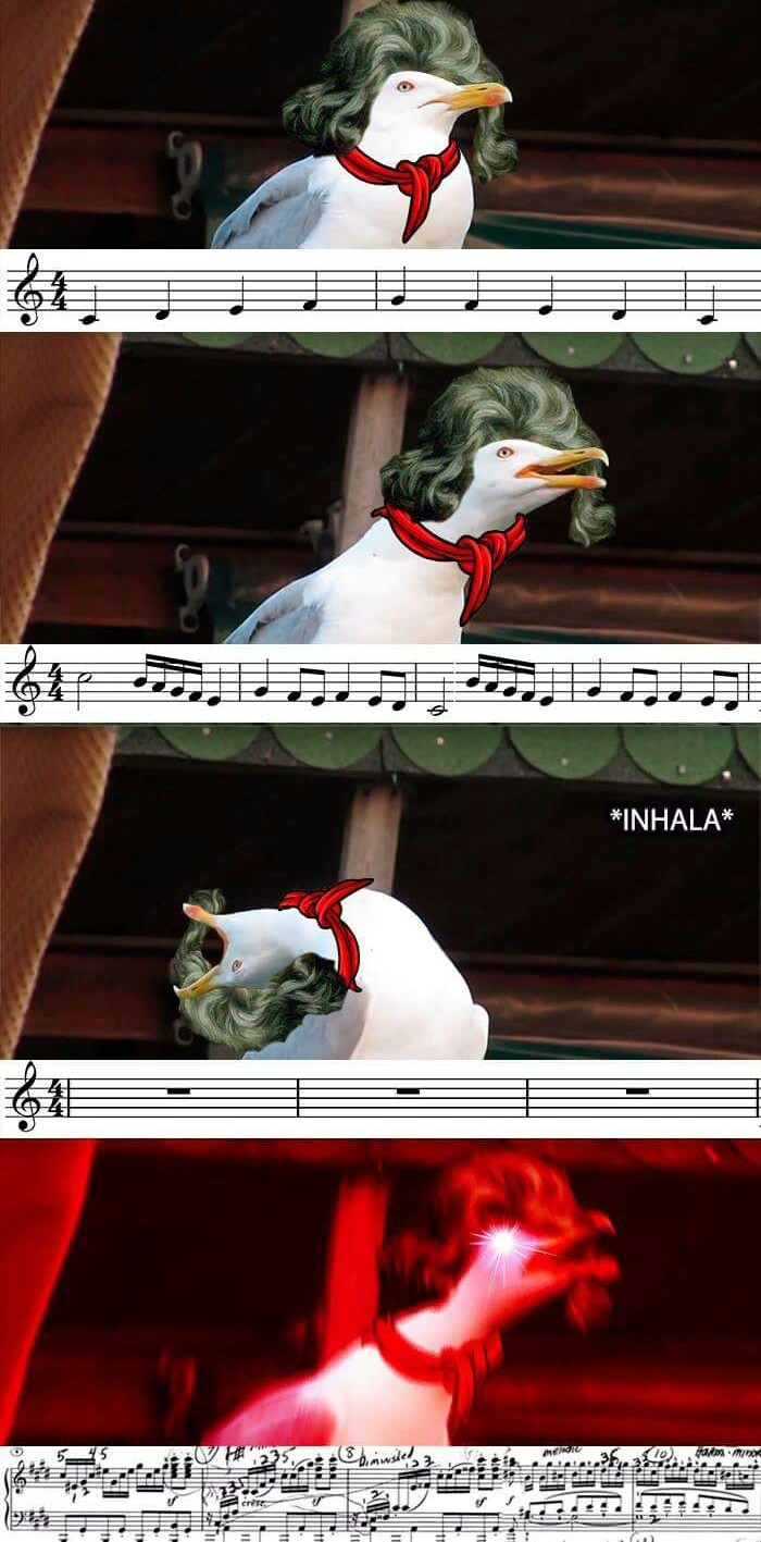 Otro meme de la gaviota