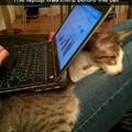 Cat sneaks under laptop