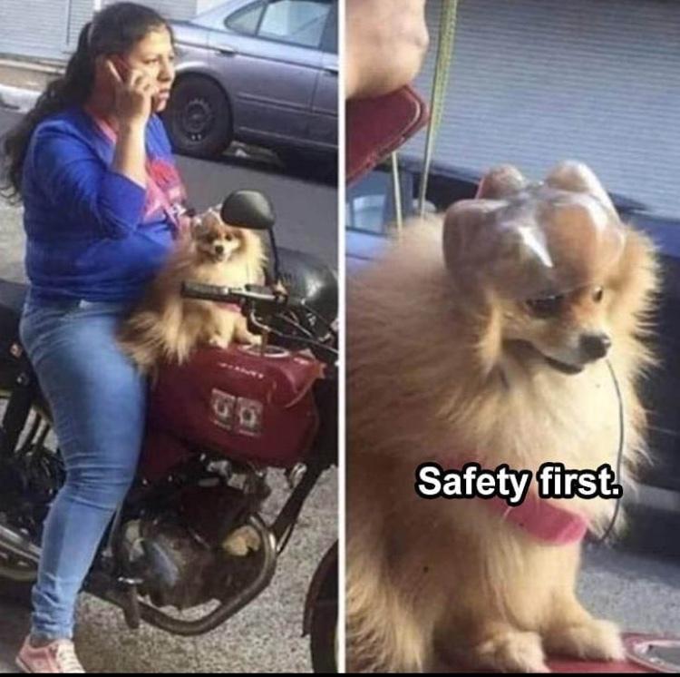 poor dog might get in a crash - meme