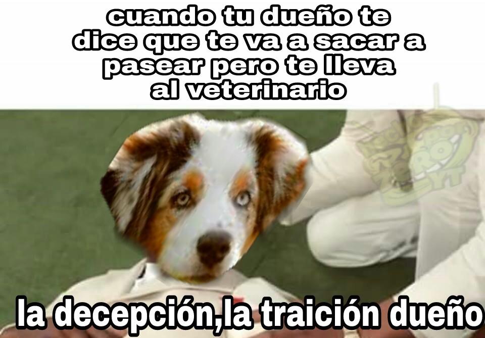 Vida de perros