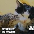Wholesome OC kitty meme