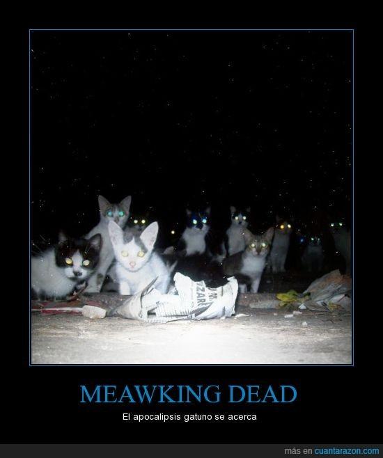 gatialking dead - meme