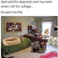 Gamer doggo