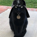 Quand meme ton chat est fan de star wars