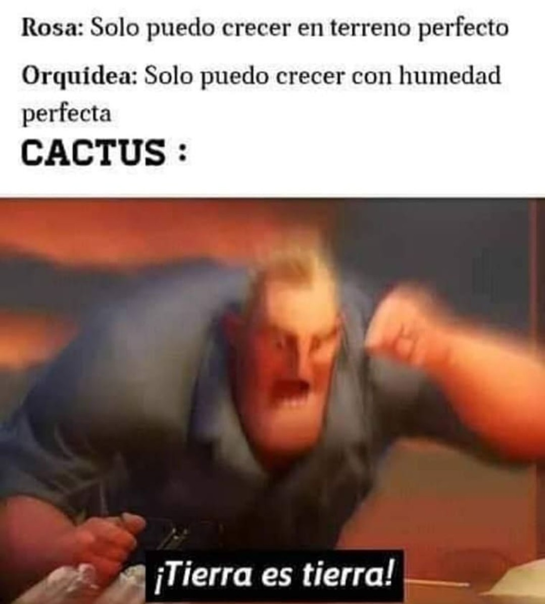 1 lokazo el caktus - meme
