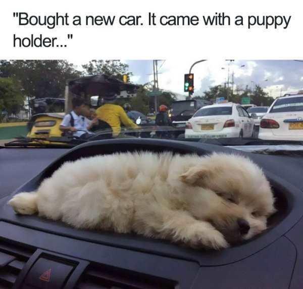 puppy holder - meme