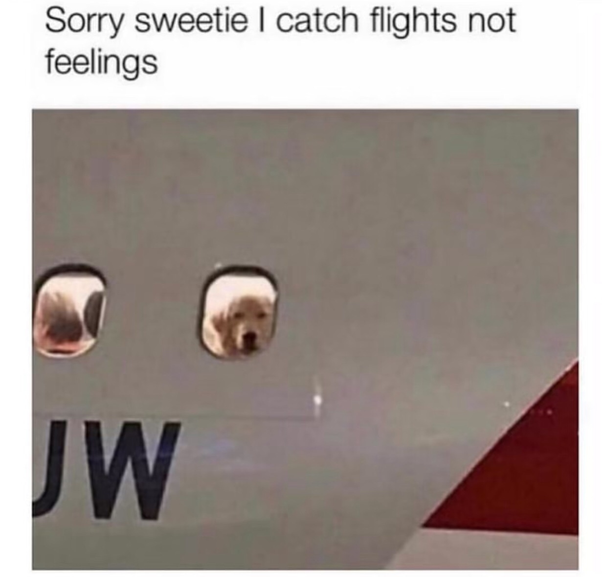 Fly fly away - meme