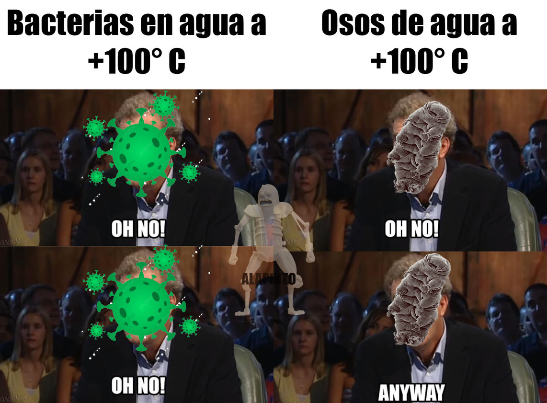 BACTERIAS Y OSOS DE AGUA - meme