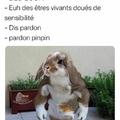 Les animaux dans le droit français