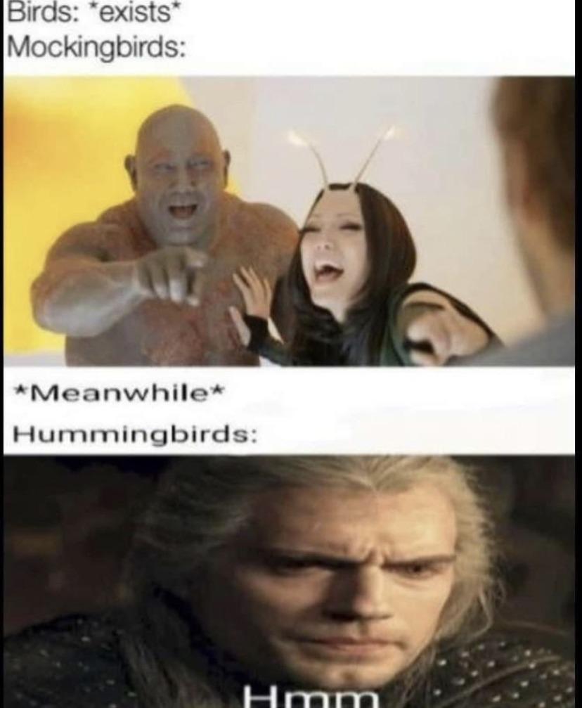 Insert bird - meme