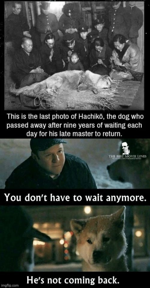 Hachiko - meme