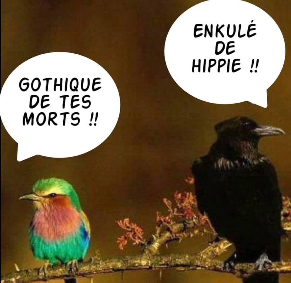 Le doux chant des oiseaux - meme