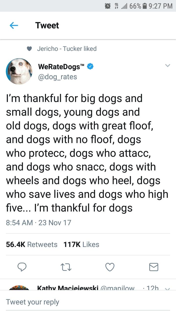 Doggos - meme