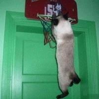Gato Baloncesto - meme