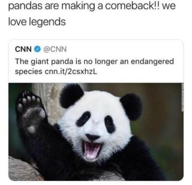 Giant panda is no longer an endangered species - meme