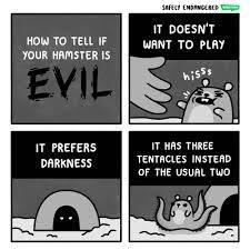 Hamster - meme