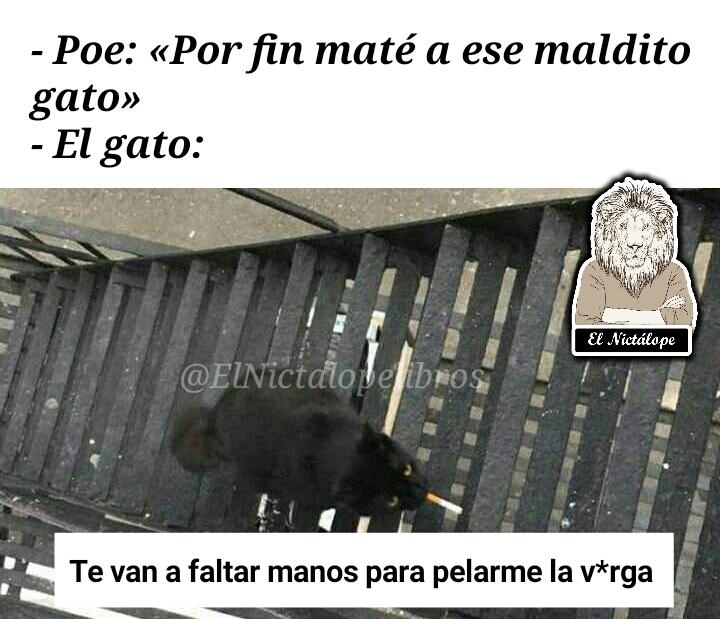 El gato negro - meme